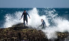 Pesca del percebe, tradicional, en Galicia.
