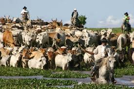 Los vaqueros en EEUU o Argentina son un ejemplo de ganadería extensiva y de mercado.